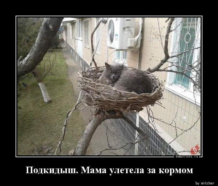 1554449226_demotivatory-5.jpg