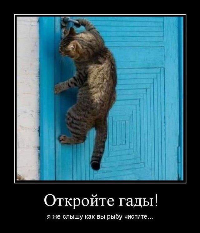 demotivatory_na_vtornik_20_foto_11.jpg