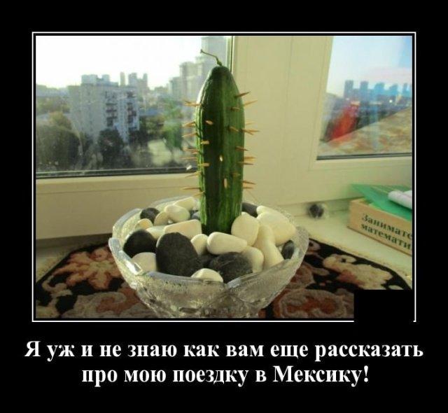 demotivatory_na_chetverg_20_foto_8.jpg