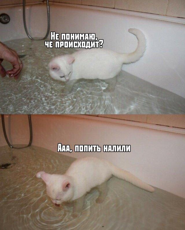fotopodborka_sredy_57_foto_1.jpg