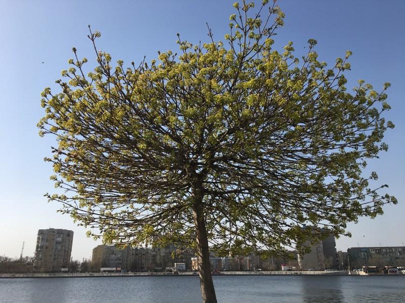 Какое-то южное дерево 14.04.2021