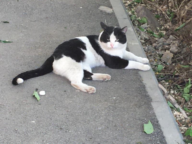 Вот такой котище с упрёком во взгляде валялся посреди дороги на 1-й Перевозной. Мимо меня вообще много котов пробегало