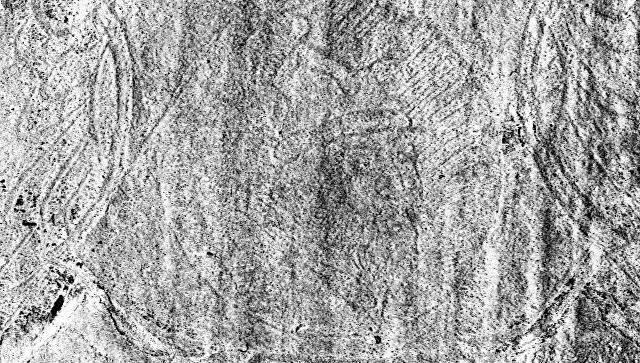 Прижизненное изображение Ивана Грозного