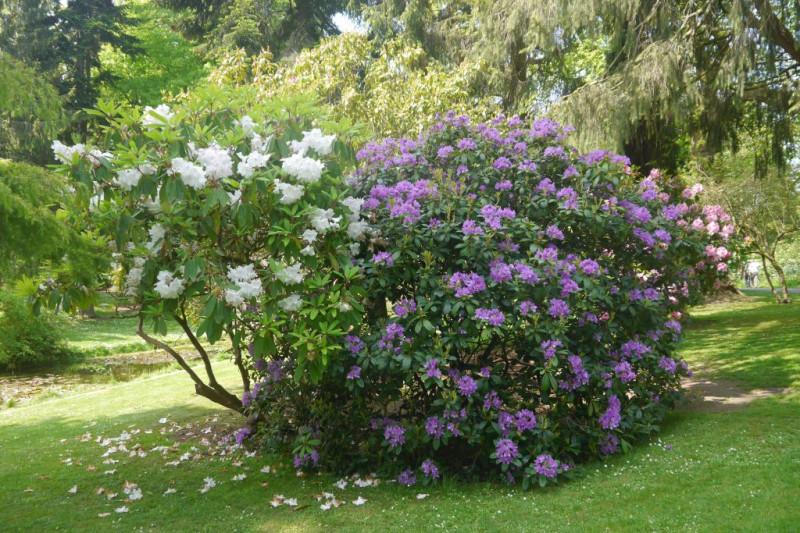 botanic gardens-2016-10