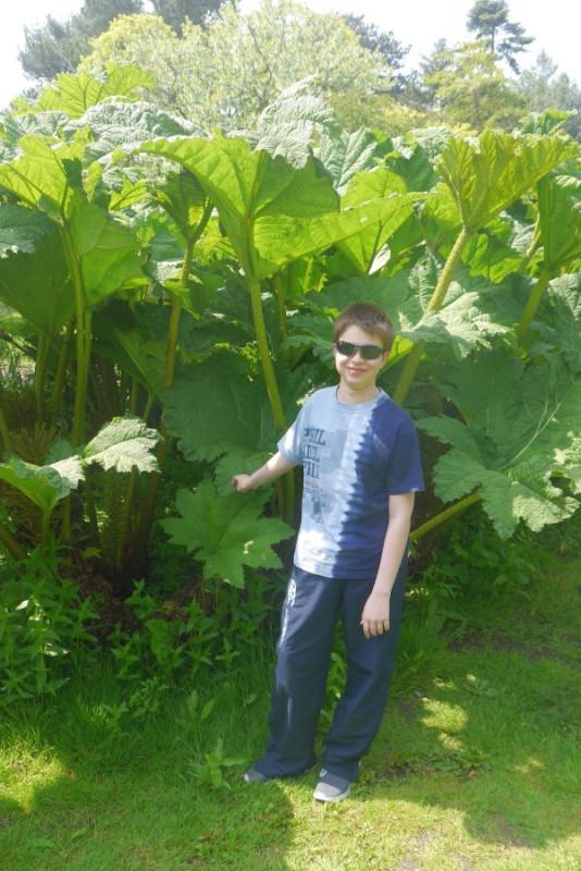 botanic gardens-2016-7