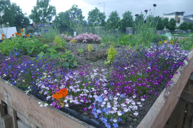 roof garden1