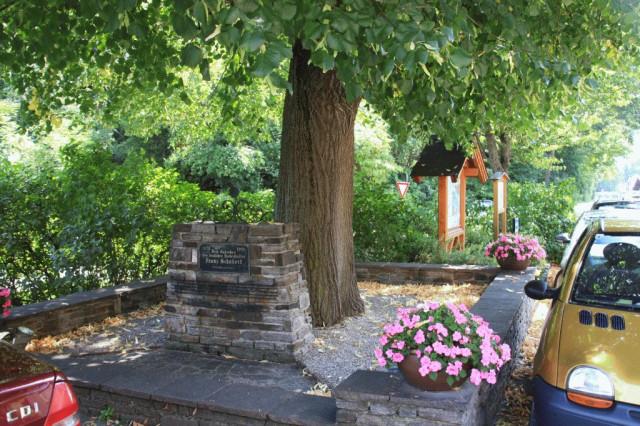 дерево, в тени которого Франц Шуберт якобы сочинил одно из своих произведений