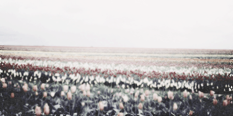 tumblr_inline_mo3if6gTrN1qz4rgp