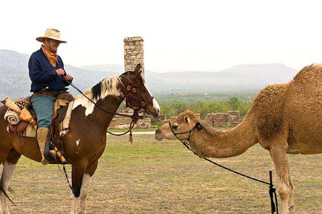 horseandcamel