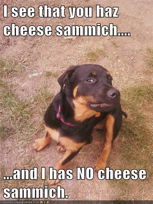 Cheese Sammich