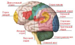 мозг-1