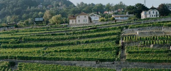 Villa-Chardonne-12