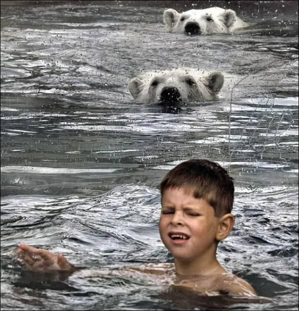 kids_swimming_with_polar_bears_01