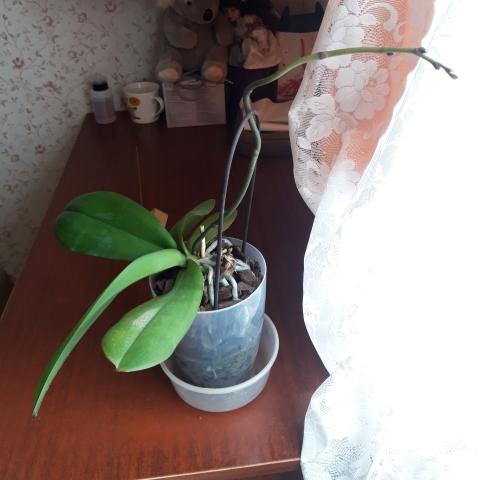 Мои растения rast2.jpg