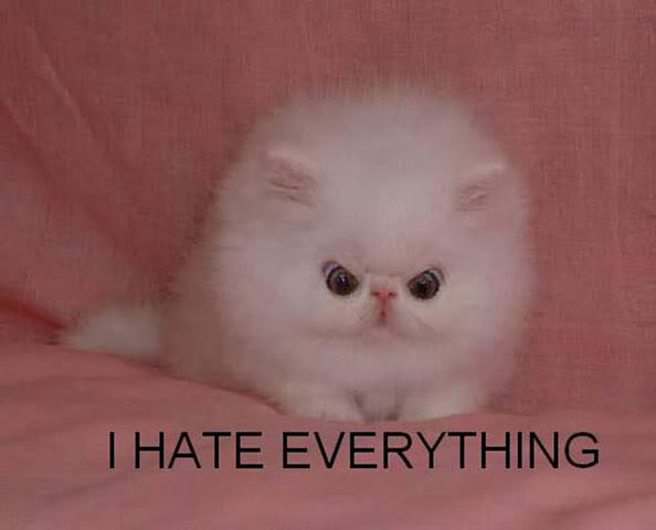 i_hate_everything_cat