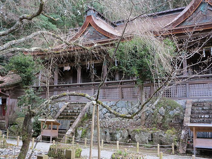 Yoshino-81