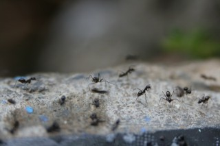 a great picture of ants