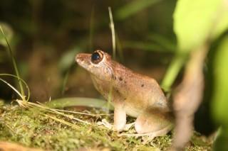 a cute little frog