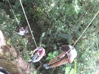 Still climbing trees