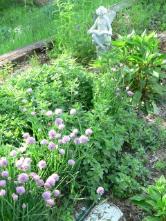 The Herb Patch: Oregano, Chives, volunteer wild flowers