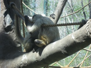 Primate Pow-wow