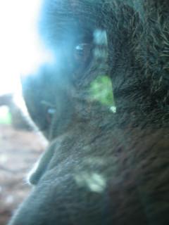 I see said the Orangutan