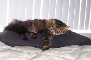 Mmm, Pillow