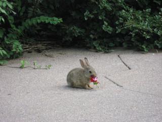Buny + Flower = Cute