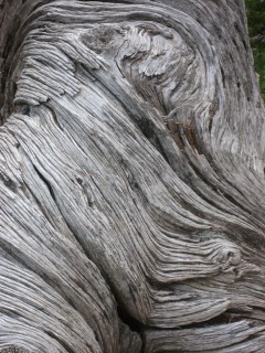 I appear to have a strange obsession with bark.