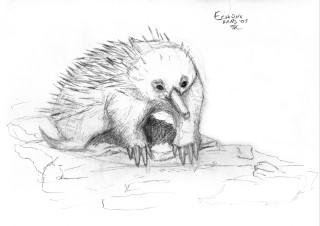 NOT a Porcupine