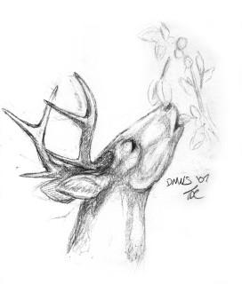 A normal deer!