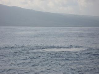 Whale Slick