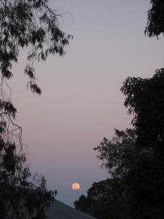The Near-Full Moon