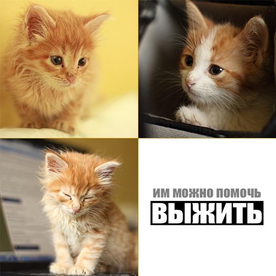 cat7s