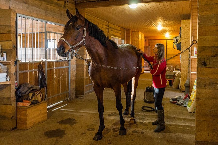 Порно член коня фото
