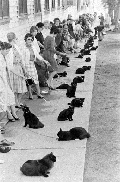 hollywood auditions for black cat 1961