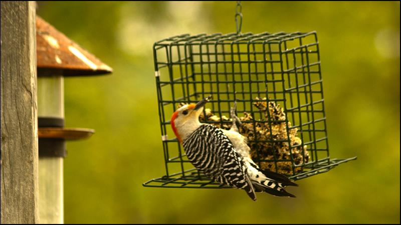 Woodpecker-8626.jpg