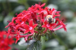 Bee on Penta