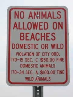 No Animals Allowed