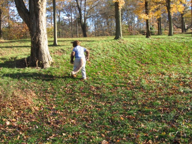 Tree Stalking, Osbourne Park