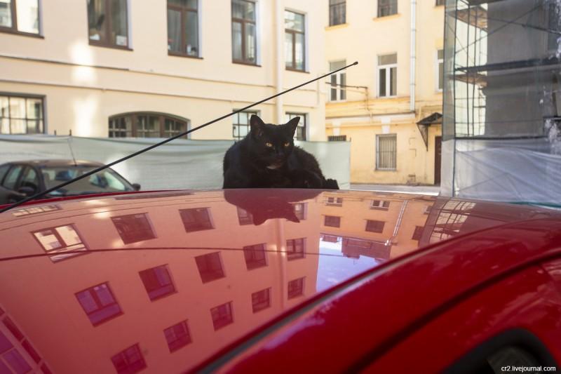 Котик в одном из дворов Санкт-Петербурга