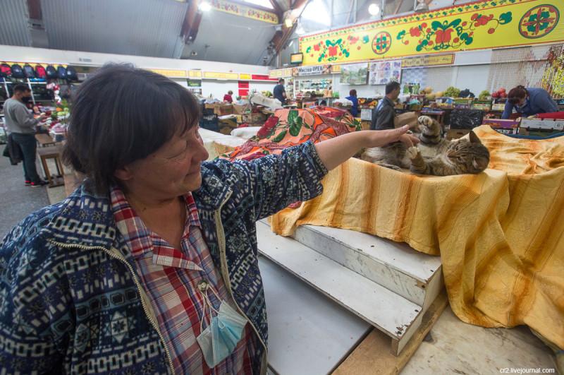 Кот Вася на рынке в Архангельске