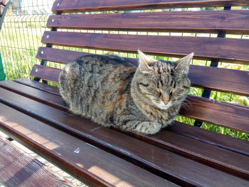 Медитирующий котик:D