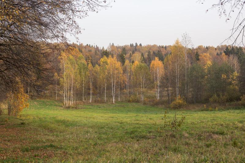 Осенний подмосковный пейзаж. Фото автора поста