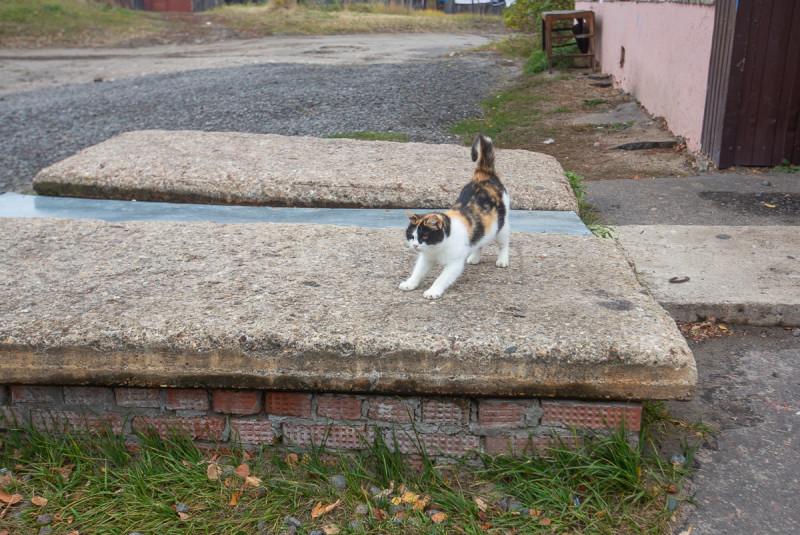 Котики посёлка Туголесский Бор.  Московская область. Фото автора поста