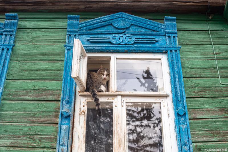 Котик из Арзамаса. Нижегородская область