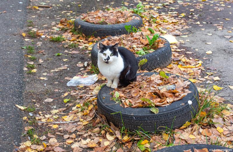 Котики на улицах Арзамаса. Нижегородская область