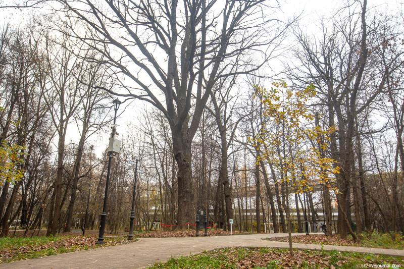 Самое старое дерево Москвы - дуб в Грачёвском парке. Ховрино, Москва
