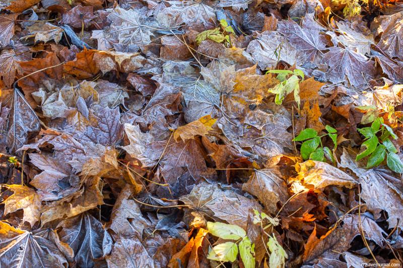 Усадьба Остафьево, ноябрьская листва в парке. Новая Москва