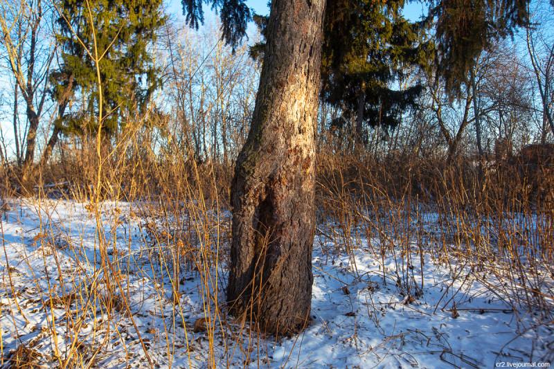 Бывший парк усадьбы Ляхово. Московская область